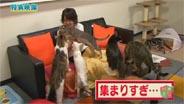 光井愛佳 DVD 「よろセン!Vol.7」